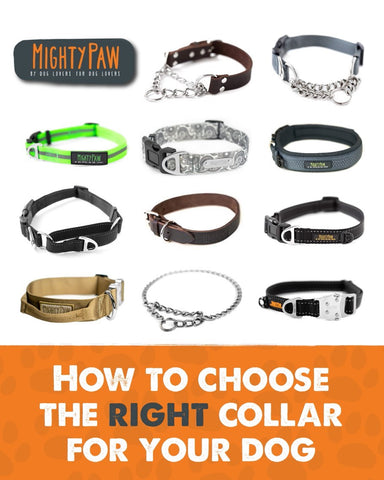 Mighty Paw | How to choose the right collar for your dog