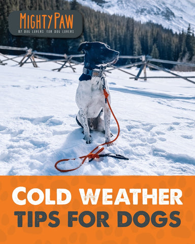 Mighty Paw | Cold weather tips for dogs