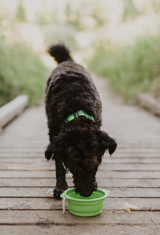 Mighty Paw Collapsible Dog Travel Bowl