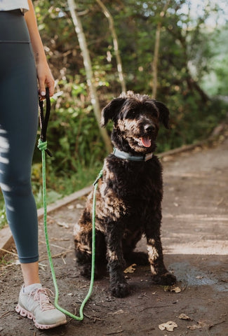 Mighty Paw | Doodle Dog wearing the Mighty Paw green rope leash and the Colorblast Martingale on a walk