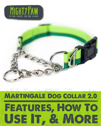 Mighty Paw Martingale Dog Collar 2.0: Features, How to use it, & more