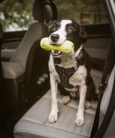 Mighty Paw Vehicle Safety Harness