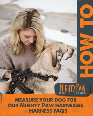 How to measure your dog for our Mighty Paw Harnesses + Harness FAQs