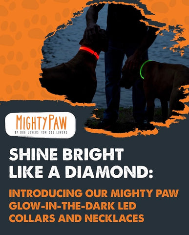 Introducing the Mighty Paw Safety LED Dog Collars & Necklaces