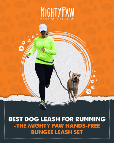 Best dog leash for running - the Mighty Paw hands-free bungee leash set