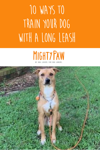 Mighty Paw Long Dog Leash