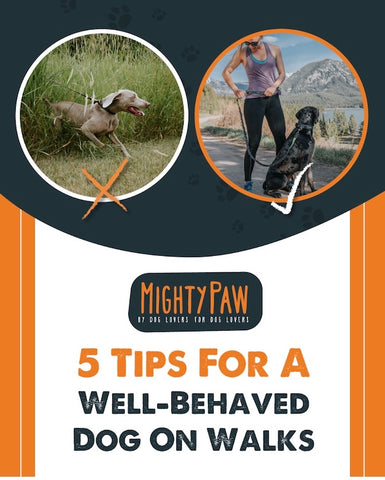 MightyPaw.com | 5 Tips for A Well-Behaved Dog On Walks