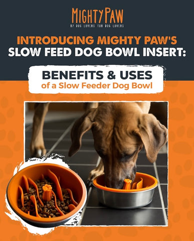 MightyPaw.com | Benefits & Uses of a Slow Feeder Dog Bowl