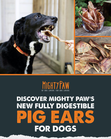MightyPaw.com   Discover Mighty Paw's new fully digestible pig ears for dogs