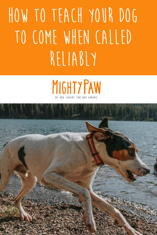 Dog Training Tips - How To Teach Your Dog To Come When Called Reliably