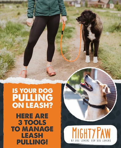 MightyPaw.com: Is Your Dog Pulling On Leash? Here Are 3 Tools To Manage Leash Pulling!