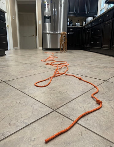 MightyPaw.com | Practicing the recall inside with Mighty Paw's Check Cord