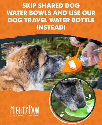 MightyPaw.com | Skip Shared Dog Water Bowls and Use Our Dog Travel Water Bottle Instead!