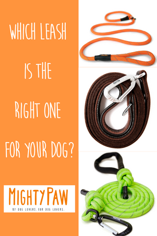 Mighty Paw | Which Leash Is The Right One For Your Dog?