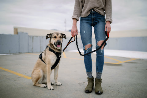 Mighty Paw Sport Harness 2.0 and Dual Handle Tactical Bungee Leash
