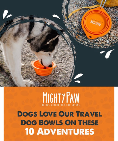 Mighty Paw - Dogs love our travel dog bowls on these 10 adventures
