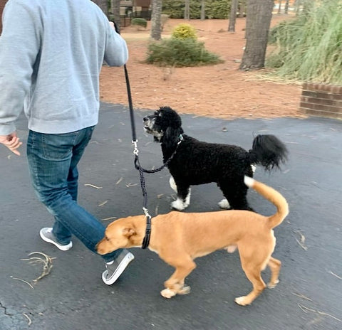 Mighty Paw Double Bungee Dog Leash