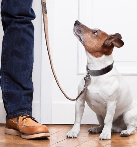 Mighty Paw Leather Dog Leash and Leather Dog Collar