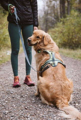 Mighty Paw Sport Dog Harness 2.0 and Dual Handle Leash