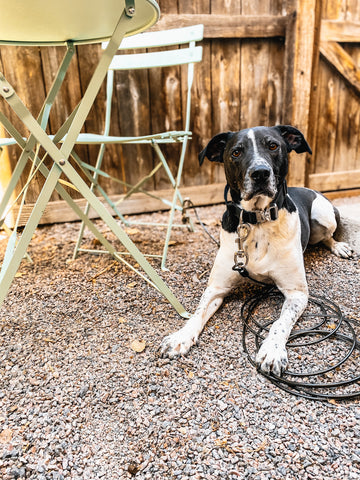 Mighty Paw Tactical Collar in Black and Tie-Out Cable Leash