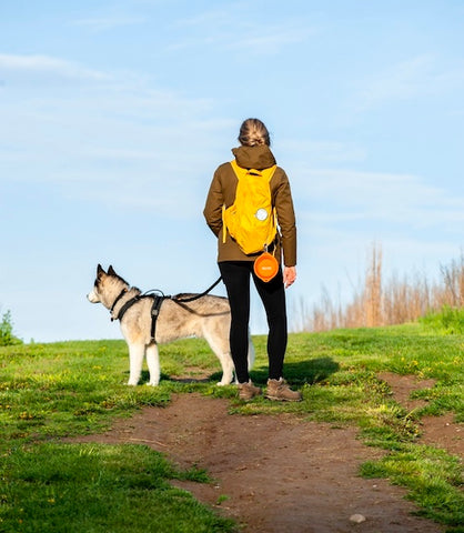 Mighty Paw's Collapsible Travel Dog Bowls Easily Clips to Backpacks