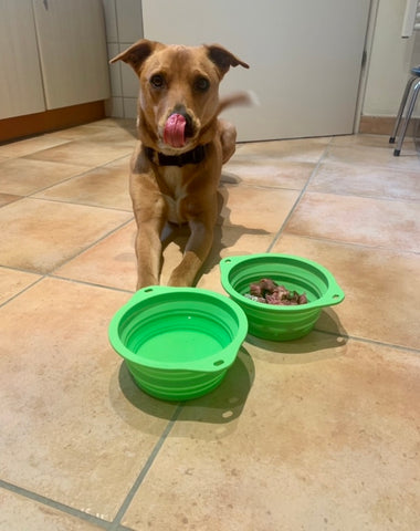 Mighty Paw's Collapsible Travel Dog Bowls work for water and food
