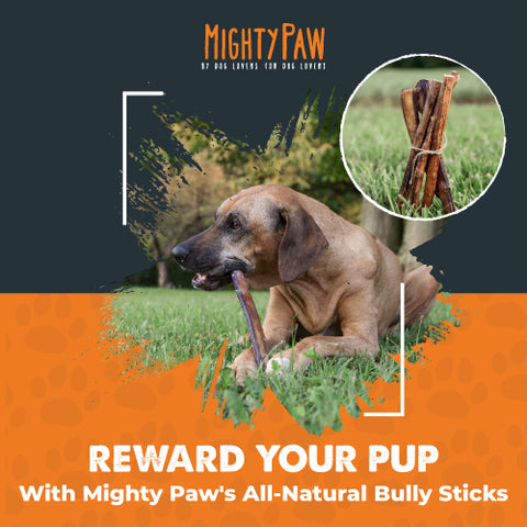 Reward your pup with Mighty Paw's All-Natural Bully Sticks
