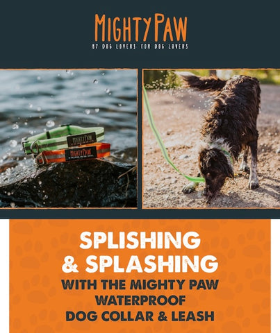 Splishing and Splashing with the Mighty Paw Waterproof Dog Collar and Leash