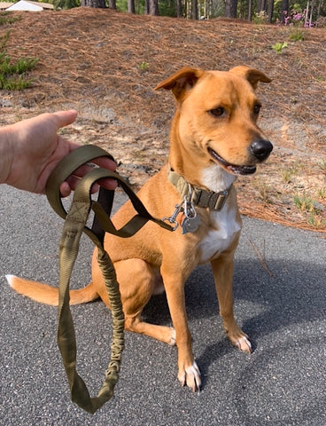 Mighty Paw Tactical Dog Collar with Matching Dual Handle Bungee Dog Leash