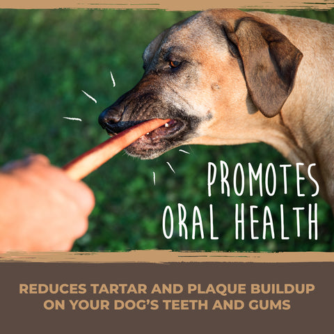 The Mighty Paw Naturals Bully Sticks promote oral health