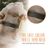 Leather Martingale Training Collar