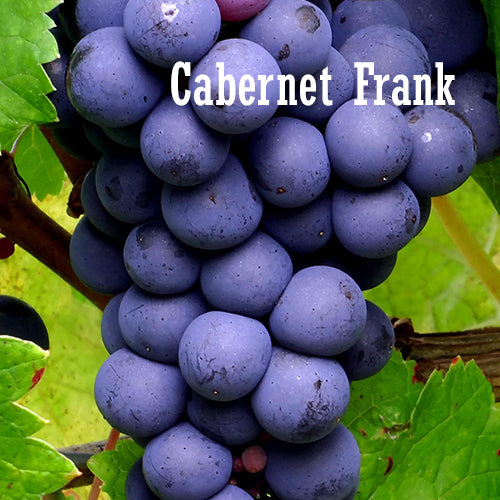 Cabernet frank wines