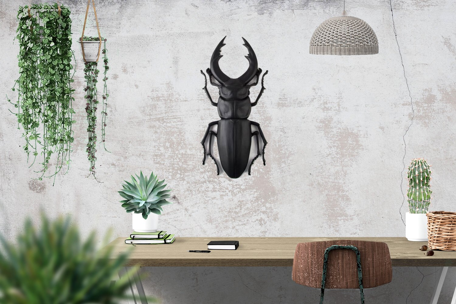 Faux Insect Taxidermy Beetle BLACK // Bug Wall Art // Trendy modern home wall decor // FREE SHIPPING - Design Atelier Article