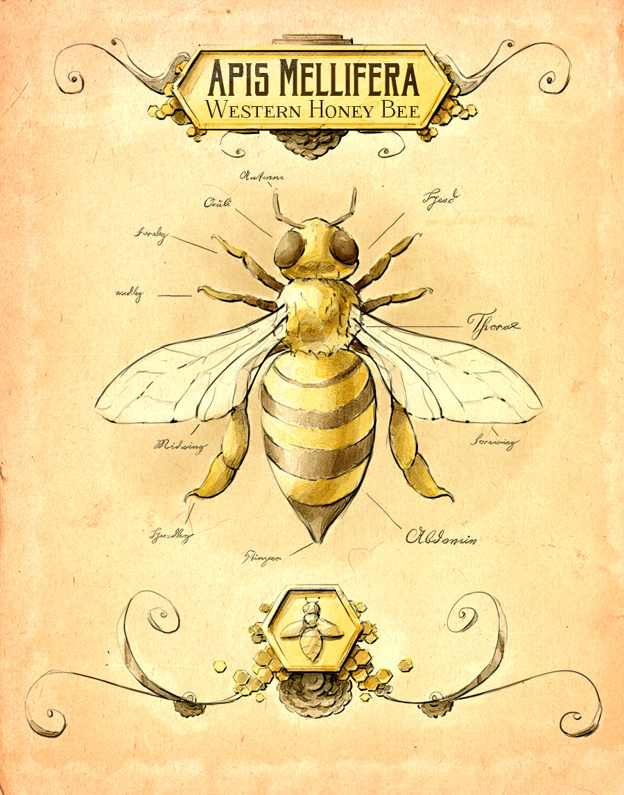 Vintage Honey Bee Print