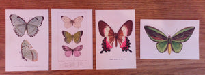 Postcards By Skona Ting