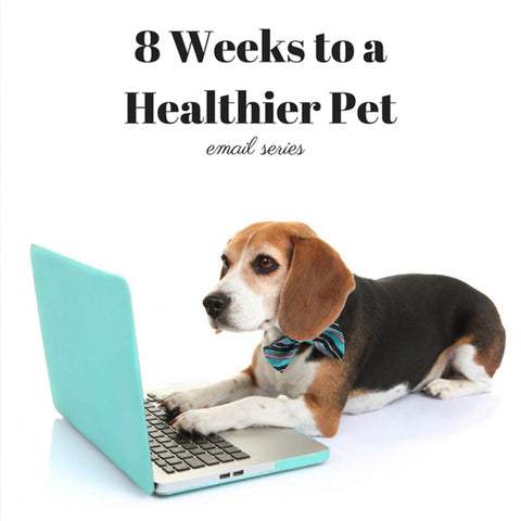 8 Weeks To A Healthy Pet Email Series