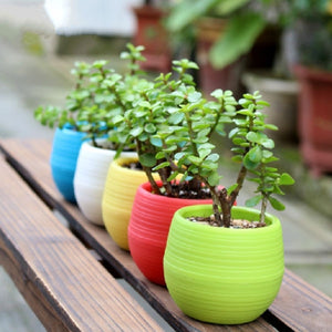 2pcs Mini Colourful 7*6.5CM Plastic Cute Round Flower Pot Succulent Plant Flowerpot For Home Office Decoration 5 Color Garden Su