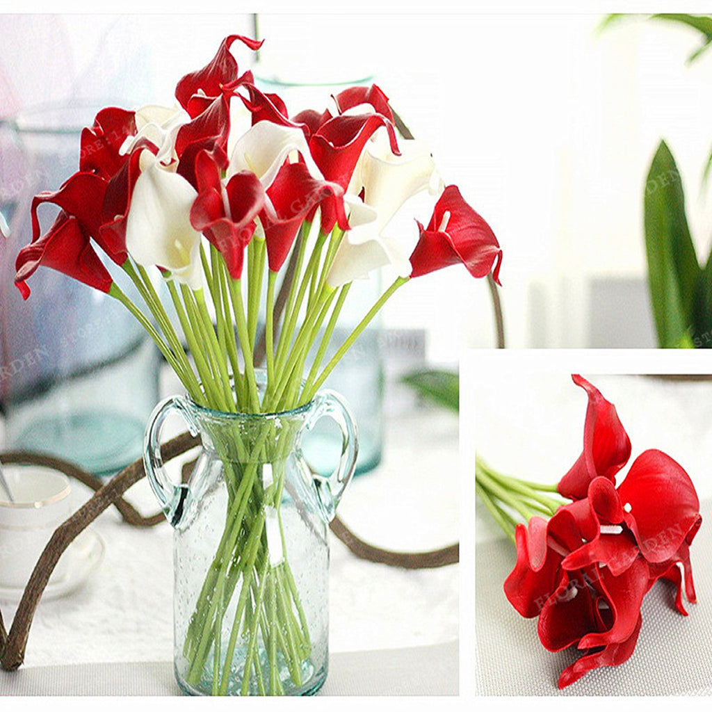 Red Calla Lily Bulbs,Red Calla Lily Flowers,Red Calla Flower Bulbs ...
