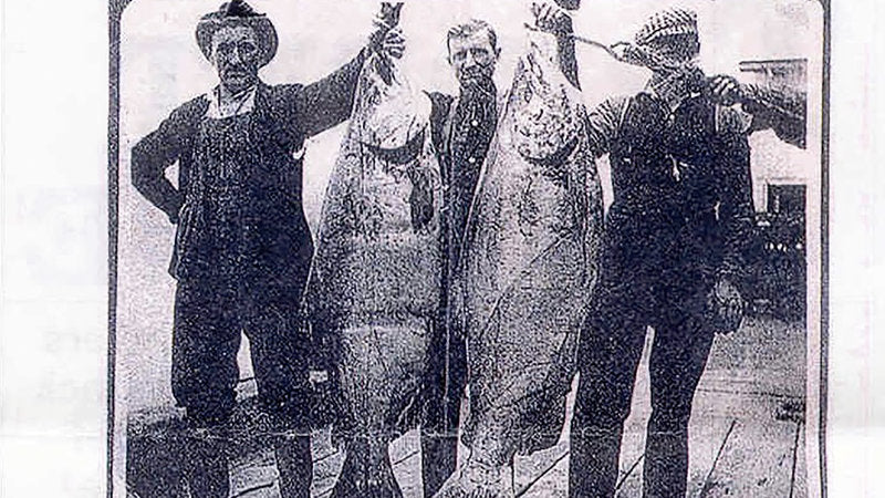 This Is Why You Don't See People-Size Salmon Anymore