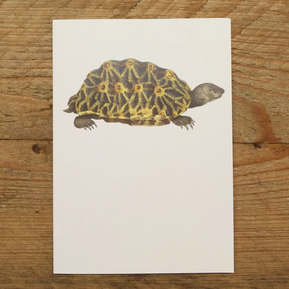 Terrapin folded note card