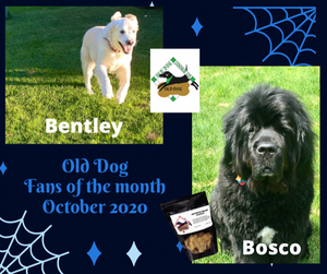 October 2020 Fans of the month