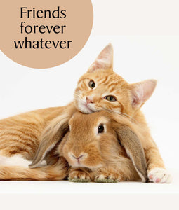 Greeting Card - Friends forever whatever
