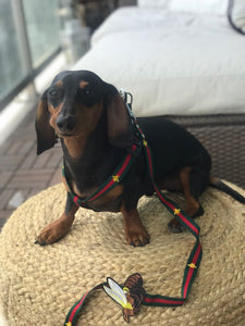 Pucci Dog Harness And Leash Set