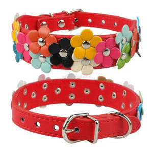 Snuggles Floral Collar Style 2