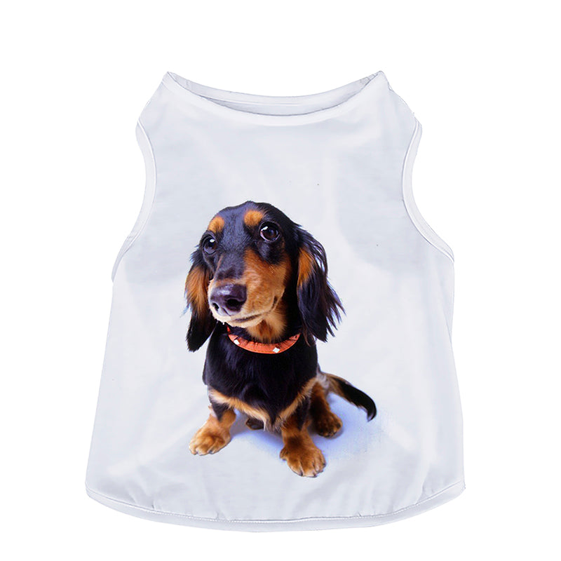 Doxie Top