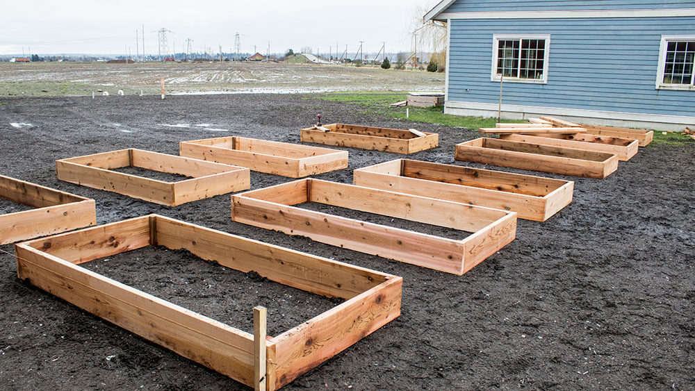 Staff Raised Beds