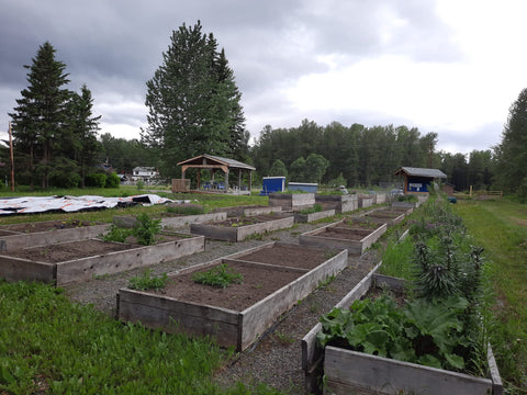 Rows of garden beds at the Houston Family Resource Centre Community Garden