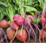 Best Beets for Companion Planting