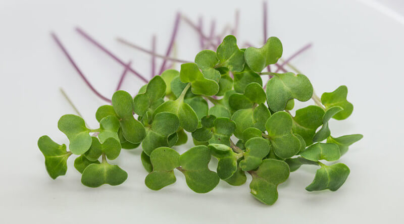 Broccoli Sprouts and Microgreens