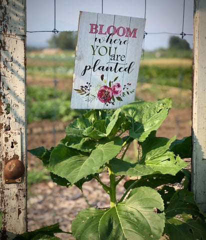 Bloom where you are planted sign at Food for Thought